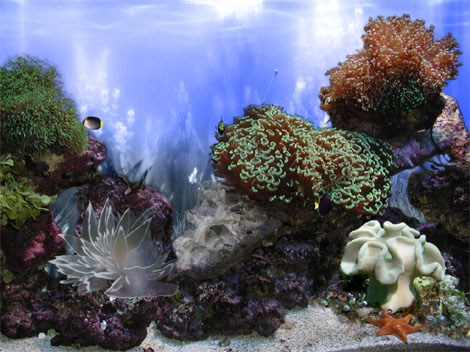 Beautiful Reef 3D Aquarium