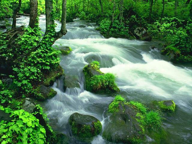 http://actualdownload.com/pictures/screenshot/free-beautiful-nature-screensaver-6650.jpg